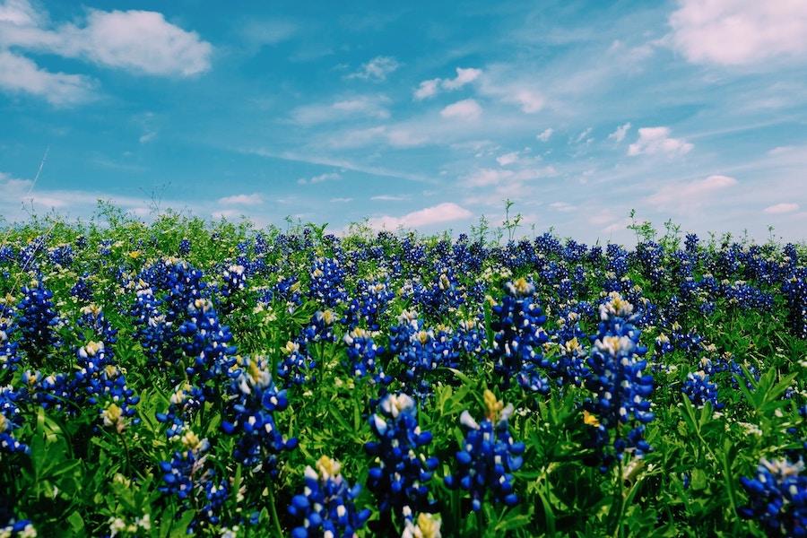texas insurance plans